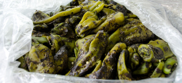 hatch chile sticky|dailywaffle