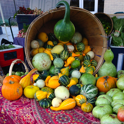 gourds at highlands farmers market denver| dailywaffle