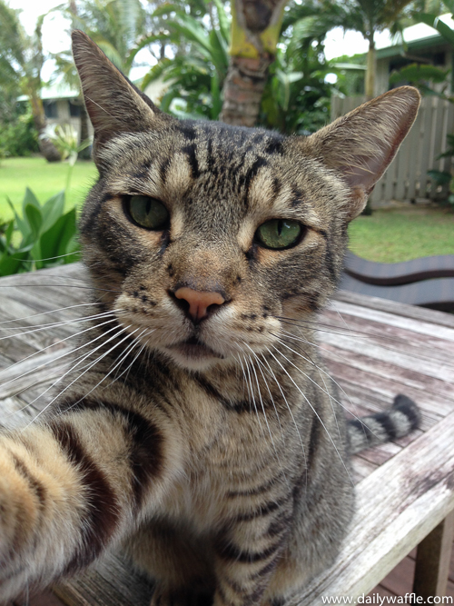 kauai vacation cat selfie |dailywaffle